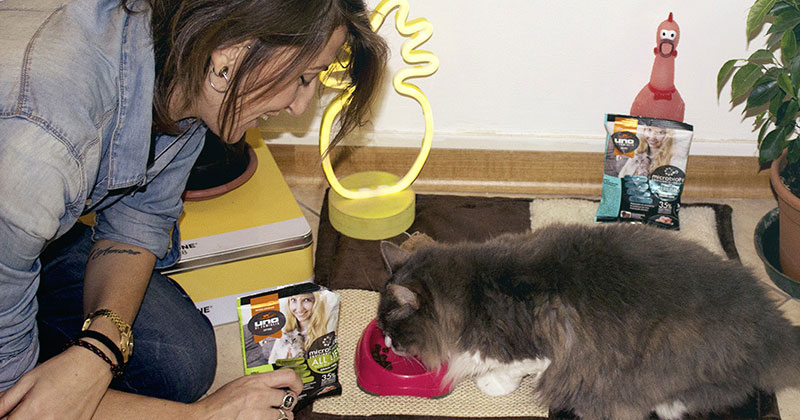 cibo per gatti